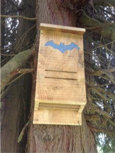 Bat Box in position